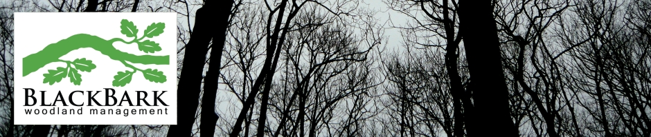 header of winter branches
