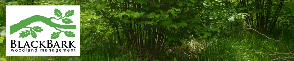 header of hazel coppice
